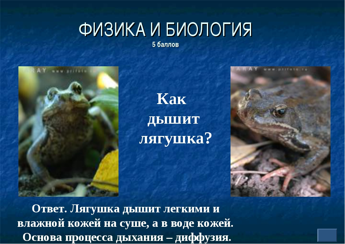 ФИЗИКА И БИОЛОГИЯ 5 баллов Как дышит лягушка? Ответ. Лягушка дышит легкими и...