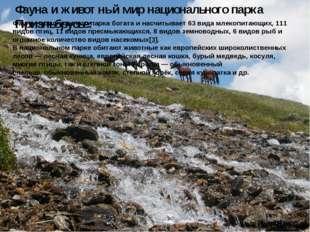 Фауна и животный мир национального парка Приэльбрусье: Фауна национального па