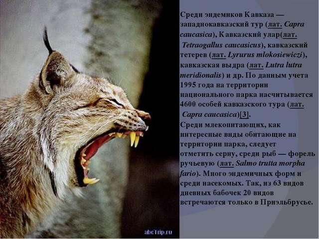 Среди эндемиков Кавказа—западнокавказский тур(лат.Capra caucasica),Кавказ...