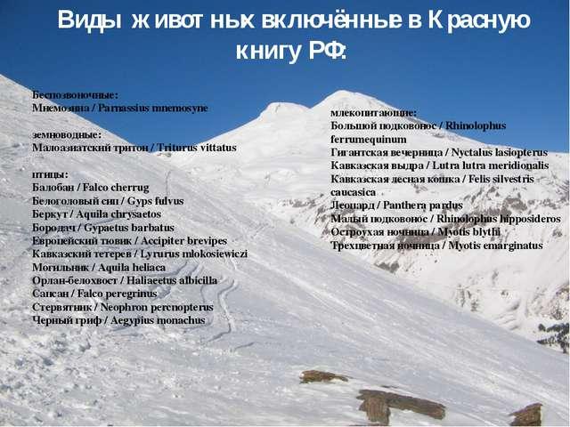 Виды животных включённые в Красную книгу РФ: Беспозвоночные: Мнемозина / Parn...
