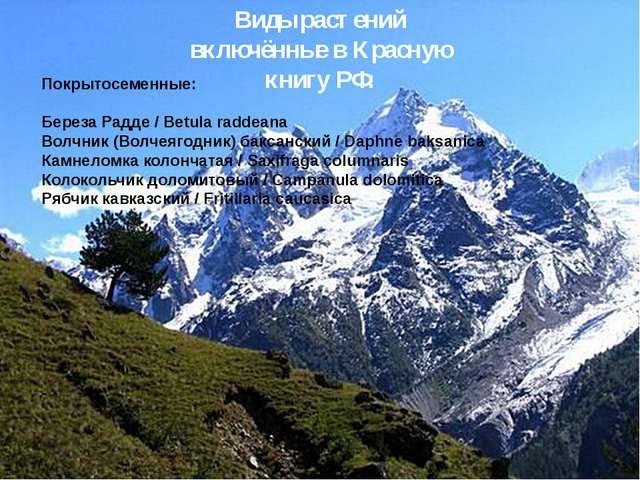 Виды растений включённые в Красную книгу РФ: Покрытосеменные: Береза Радде /...