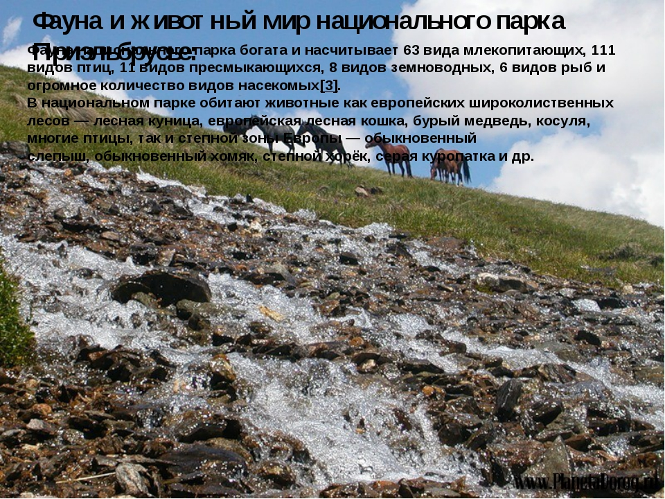 Фауна и животный мир национального парка Приэльбрусье: Фауна национального па...