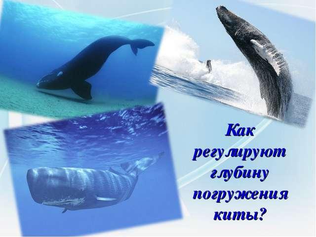Как регулируют глубину погружения киты?