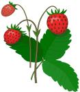 http://900igr.net/datai/morskie-zhiteli/Bakterii.files/0027-083-Vrednykh-bakterij-mnogo-na-fruktakh-i-jagodakh-kotorye-rastut-na-ulitse.png