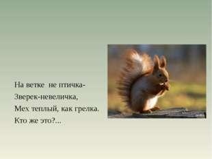 На ветке не птичка- Зверек-невеличка, Мех теплый, как грелка. Кто же это?...