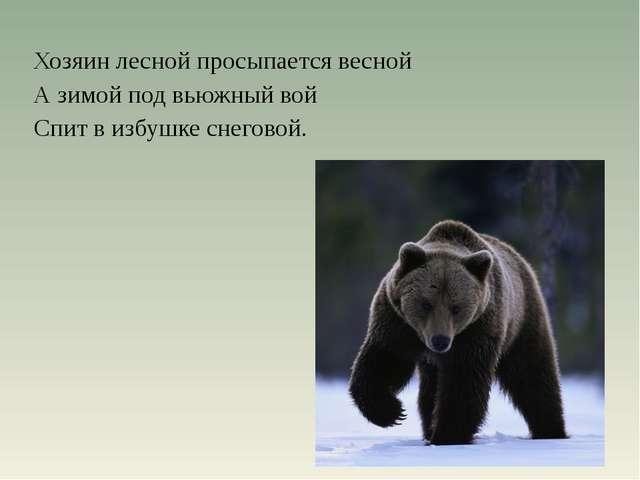 Хозяин лесной просыпается весной А зимой под вьюжный вой Спит в избушке снего...