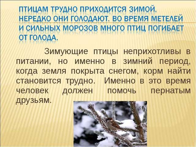 Зимующие птицы неприхотливы в питании, но именно в зимний период, когда земл...