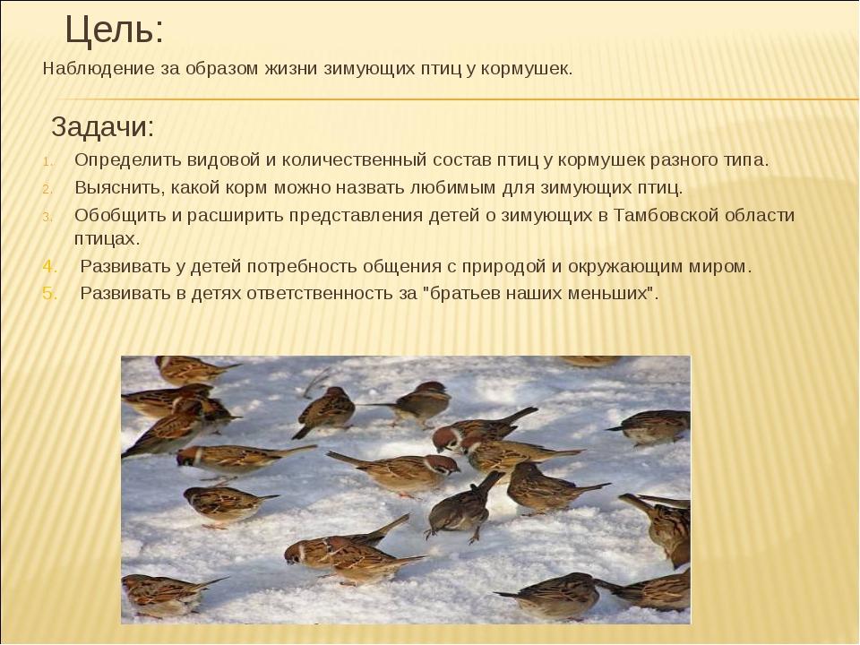 Цель: Наблюдение за образом жизни зимующих птиц у кормушек. Задачи: Определи...