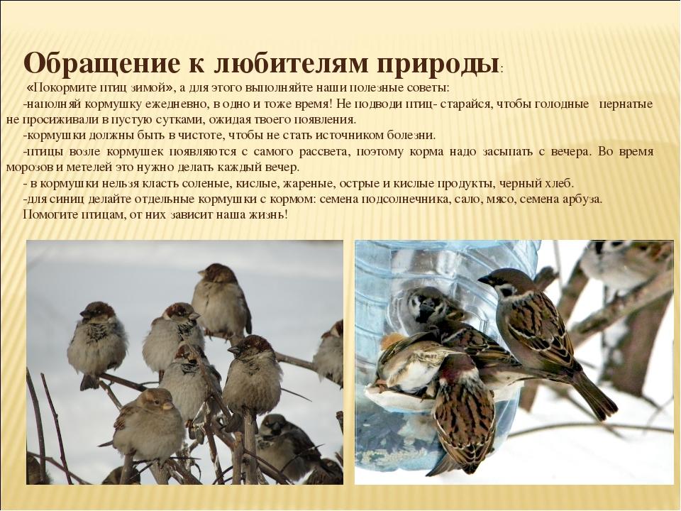 Обращение к любителям природы: «Покормите птиц зимой», а для этого выполняйт...