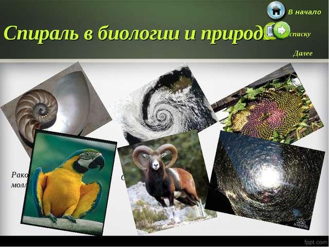 Спираль в биологии и природе Раковины улиток и моллюсков Океанские волны Семе...