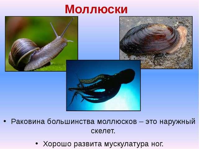 Моллюски Раковина большинства моллюсков – это наружный скелет. Хорошо развита...