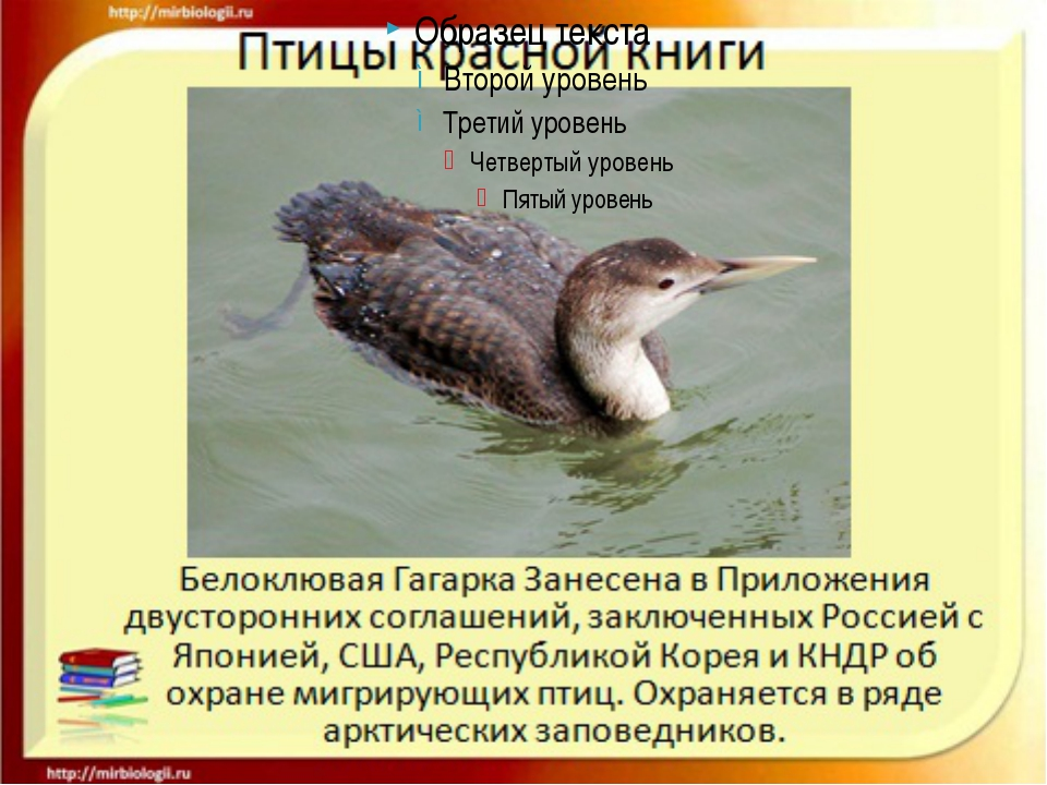 https://fs00.infourok.ru/images/doc/163/187753/img6.jpg