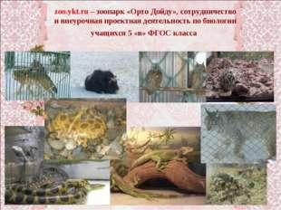 zoo.ykt.ru – зоопарк «Орто Дойду», сотрудничество и внеурочная проектная деят