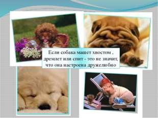Если собака машет хвостом , дремлет или спит - это не значит, что она настрое