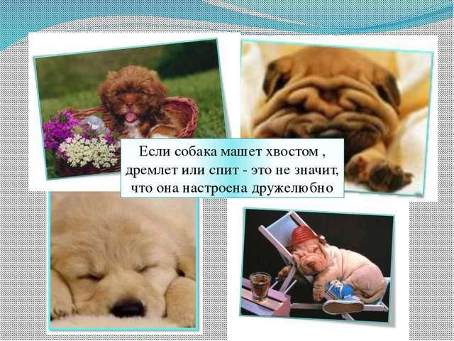 Если собака машет хвостом , дремлет или спит - это не значит, что она настрое...