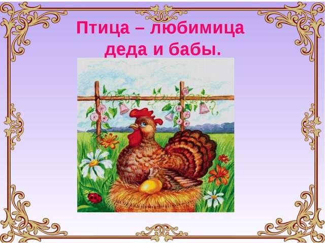 Птица – любимица деда и бабы.