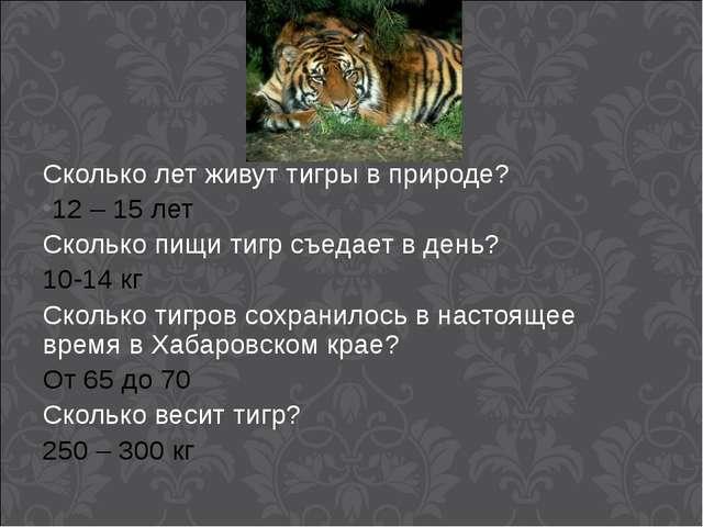 Сколько лет живут тигры в природе? 12 – 15 лет Сколько пищи тигр съедает в де...