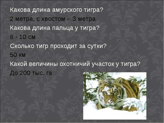 Какова длина амурского тигра? 2 метра, с хвостом – 3 метра Какова длина пальц...