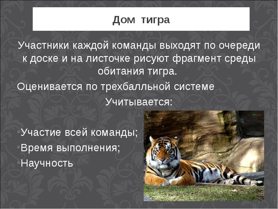 Дом тигра Участники каждой команды выходят по очереди к доске и на листочке р...
