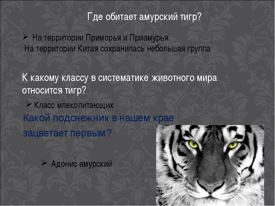 Где обитает амурский тигр? На территории Приморья и Приамурья. На территории...