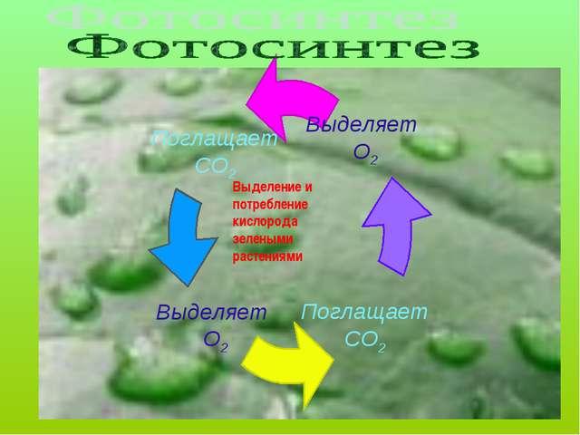Выделение и потребление кислорода зелеными растениями