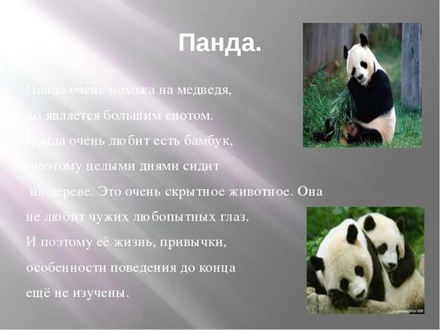 Панда. Панда очень похожа на медведя, но является большим енотом. Панда очень...