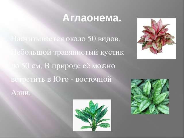 Аглаонема. Насчитывается около 50 видов. Небольшой травянистый кустик до 50 с...