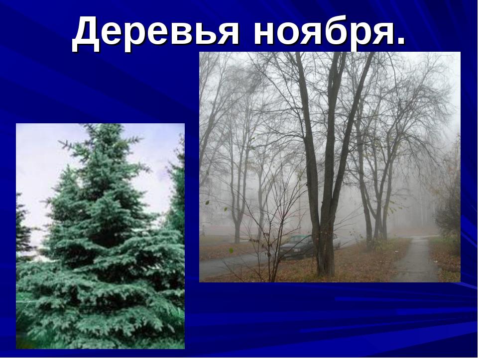 Деревья ноября.