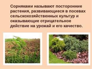 Сорняками называют посторонние растения, развивающиеся в посевах сельскохозяй