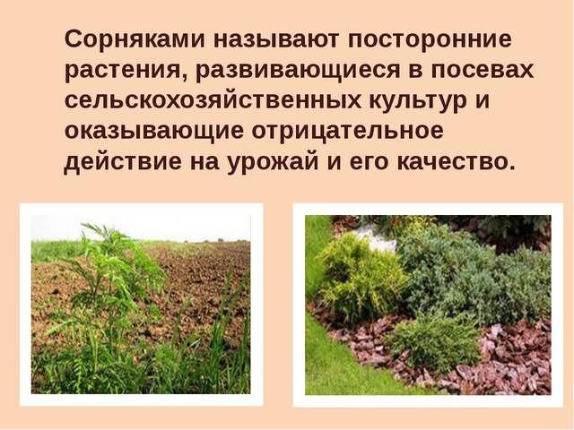 Сорняками называют посторонние растения, развивающиеся в посевах сельскохозяй...