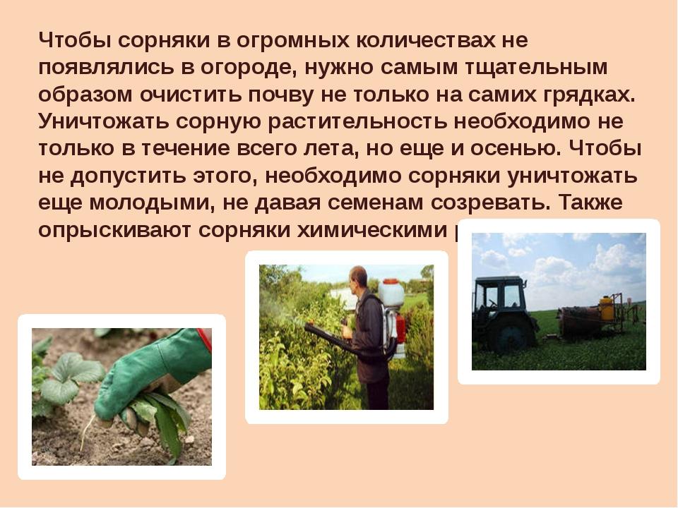 Чтобы сорняки в огромных количествах не появлялись в огороде, нужно самым тща...