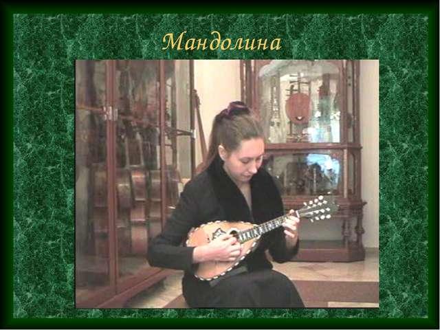 Мандолина