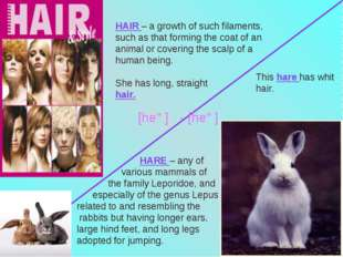 HAIR – a growth of such filaments, such as that forming the coat of an animal