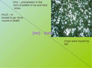 HAIL – precipitation in the form of pellets of ice and hard snow. Crops were