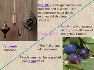 PLUM – any of several shrubs or small trees of The genus Prunus The fruit of