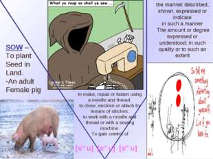 SOW – To plant Seed in Land. An adult Female pig the manner described, shown,