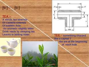 TEA – A shrub, tea sinensis Or Camelia sinensis Of eastern Asia An aromatic s