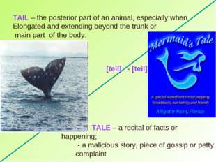 TAIL – the posterior part of an animal, especially when Elongated and extendi