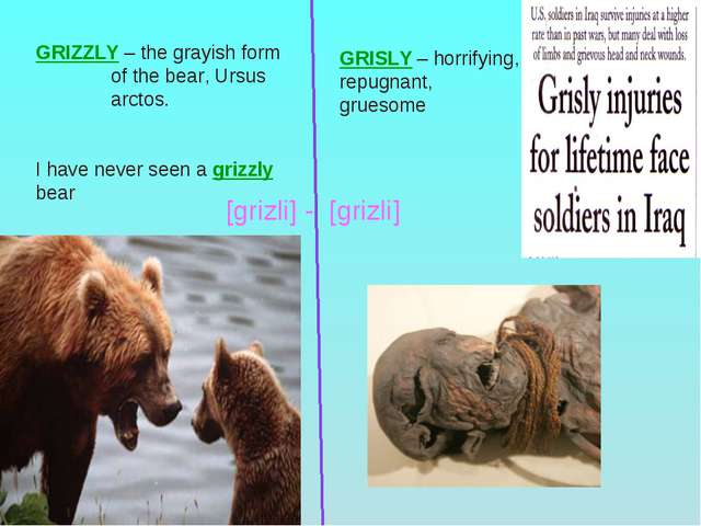 GRIZZLY – the grayish form of the bear, Ursus arctos. I have never seen a gri...