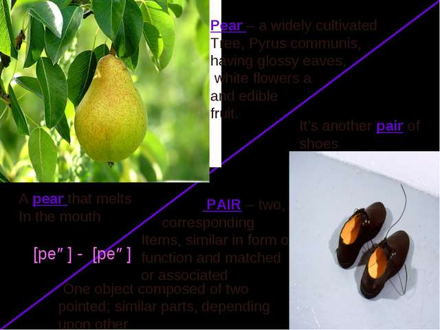 Pear – a widely cultivated Tree, Pyrus communis, having glossy eaves, white f...