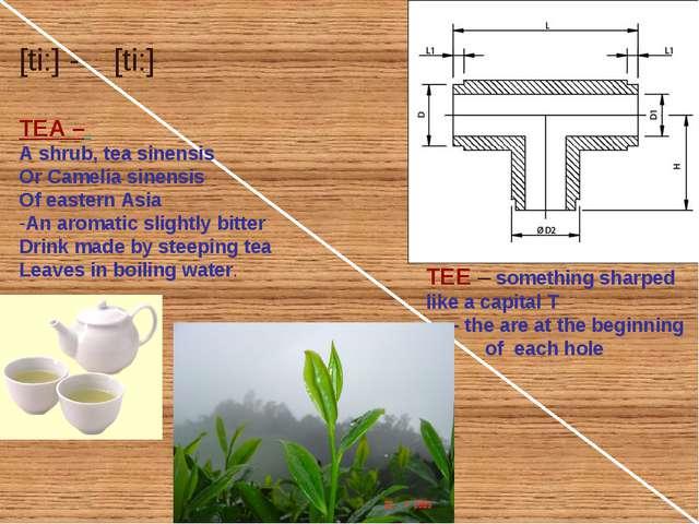 TEA – A shrub, tea sinensis Or Camelia sinensis Of eastern Asia An aromatic s...