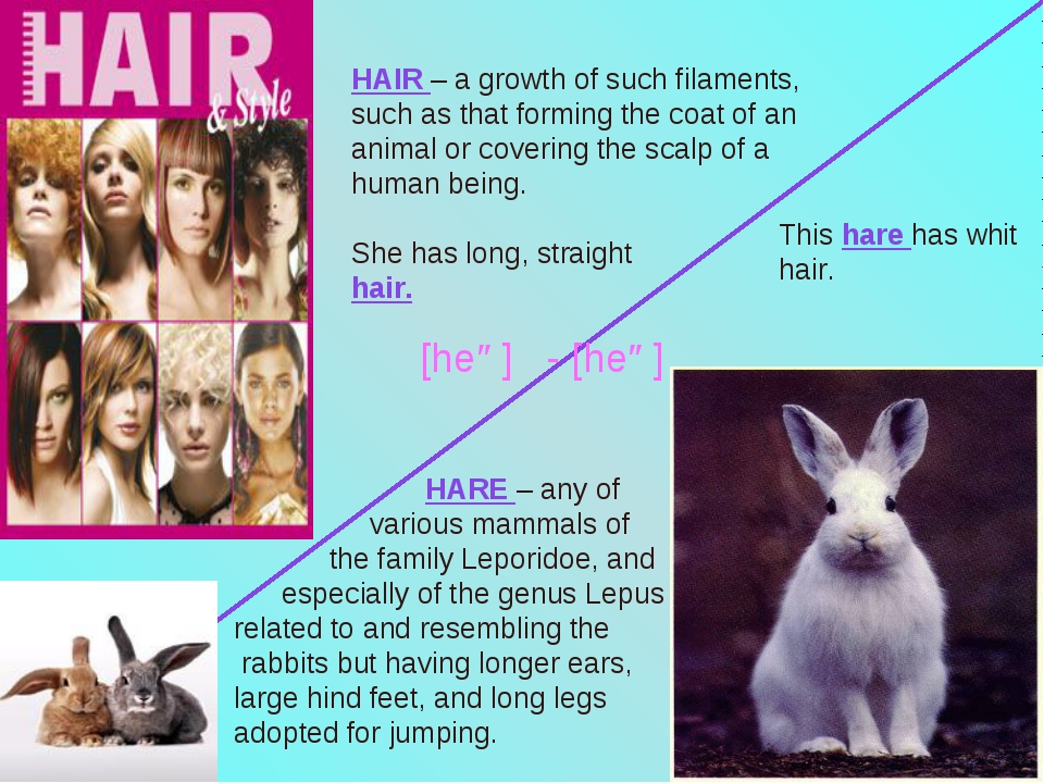 HAIR – a growth of such filaments, such as that forming the coat of an animal...