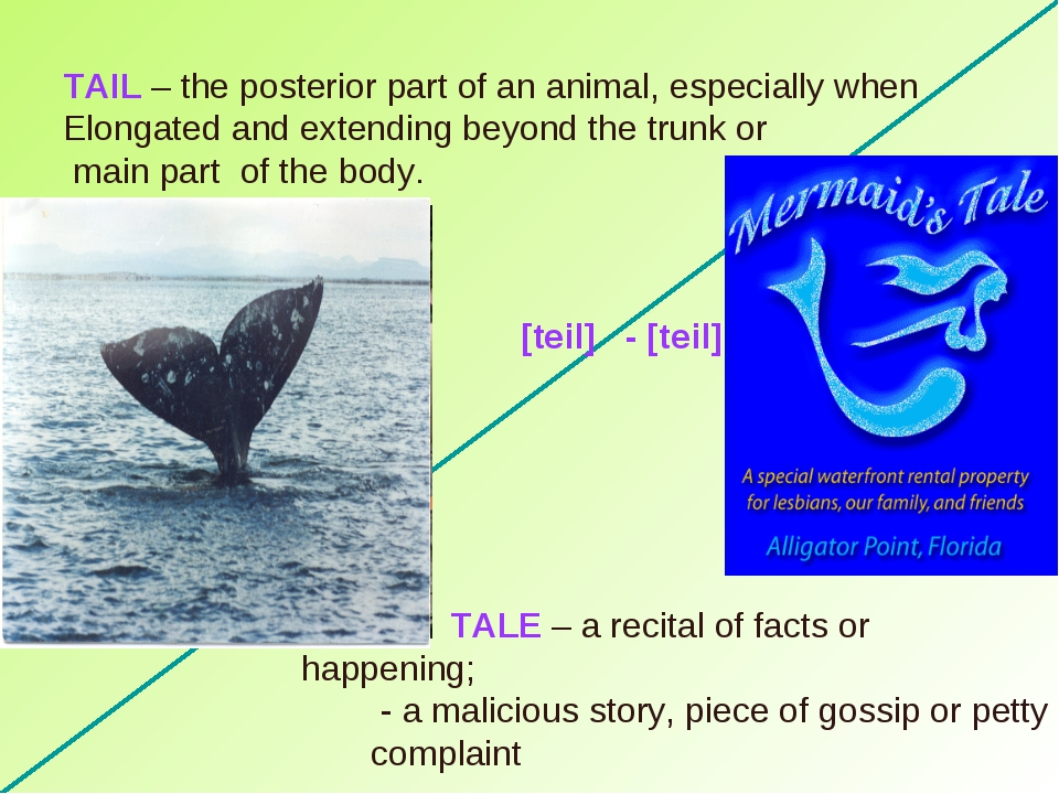 TAIL – the posterior part of an animal, especially when Elongated and extendi...