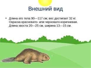 Внешний вид Длина его тела 90—117 см; вес достигает 32 кг. Окраска красновато