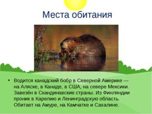 Места обитания Водится канадский бобр в Северной Америке — наАляске, вКана