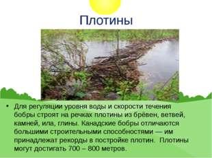 Плотины Для регуляции уровня воды и скорости течения бобры строят на речках п