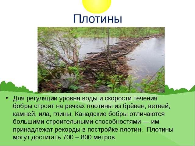 Плотины Для регуляции уровня воды и скорости течения бобры строят на речках п...