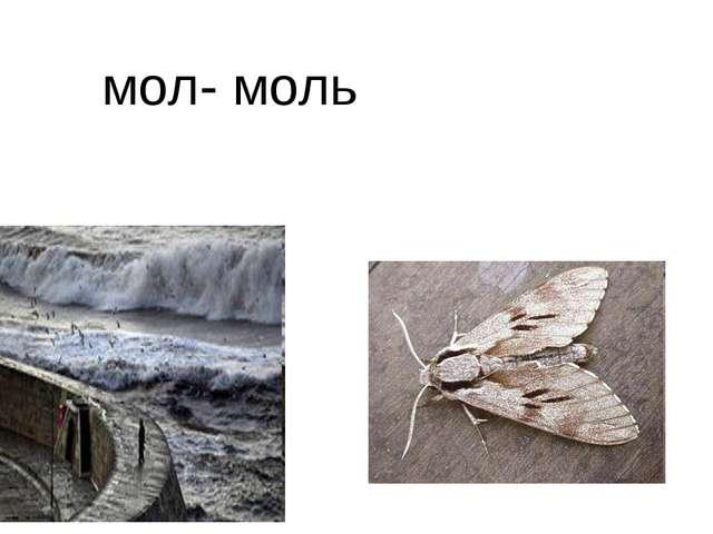 мол- моль