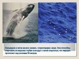 Кальмаров и китов можно назвать «спринтерами» моря. Они способны стартовать и