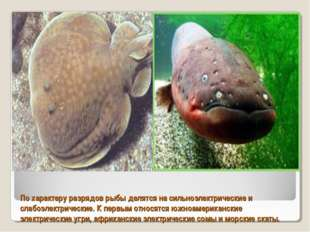 По характеру разрядов рыбы делятся на сильноэлектрические и слабоэлектрически